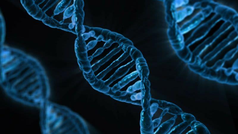 Cadena ADN Humano